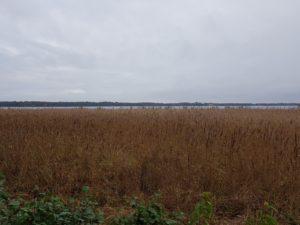 Blick über den Templiner See