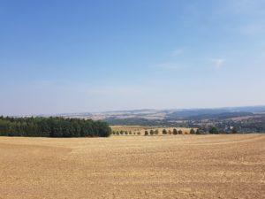 ERZHIKE 2018 - weiter Blick am Waldrand