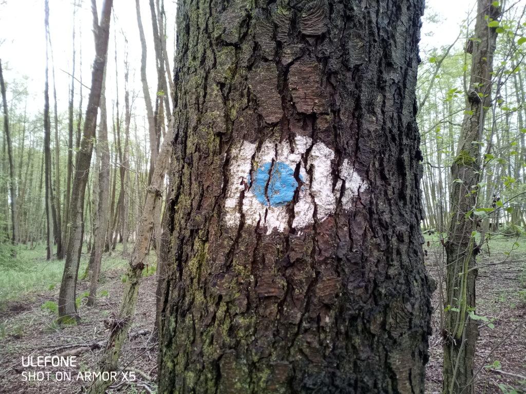 Das Zeichen des 66-Seen-Rundweg: Blauer Punkt auf weißem Grund